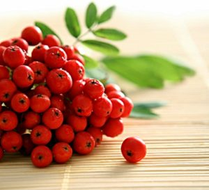 https://obatherbalnusantara.com/beberapa-jenis-tanaman-herbal-di-indonesia-dan-khasiatnya/