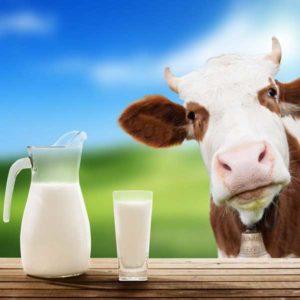 http://obatherbalnusantara.com/perbandingan-manfaat-susu-kerbau-dan-susu-sapi/