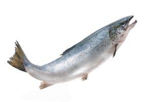 http://obatherbalnusantara.com/makanan-yang-mampu-untuk-menjaga-kesehatan-tulang-dan-sendi/