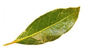 http://obatherbalnusantara.com/beberapa-mafaat-daun-alpukat-yang-belum-diketahui/
